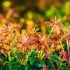 Usos esotéricos de las plantas